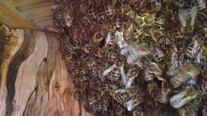 Bienenbaum-300x169 bee-my.world macht 100 Schulen zu Schulimkereien
