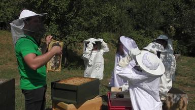 Eggenstein10 bee-my.world macht 100 Schulen zu Schulimkereien