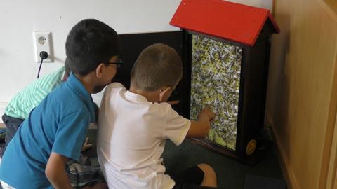 Kinder beobachten den Bienenschwarm
