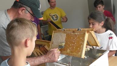 Entdeckeln der Honigrahmen