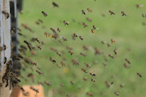 Bienenprojekt der Grundschule Müssenredder